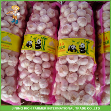 Pure White Garlic 5.0cm 10kg/Bag