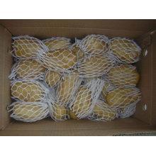 Chinesische frische Kartoffel
