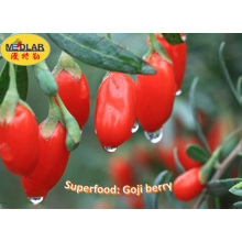Bayas de Goji de la fruta tradicional china de la salud (Wolfberry) -380PCS / 50g
