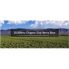 Rraditional Herb Goji Berry