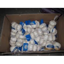 Nova Colheita de Exportação Chiese Boa Qualidade Alho Branco Normal