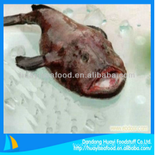 good taste frozen premium less expensive monkfish fast delivery supplier