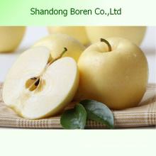 Вкусное сочное хрустящее сладкое золотистое яблоко