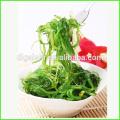 Chine Dalian Gaishi Salade japonaise d'algues sargassum casher en gros pour les aliments de sushi