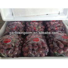 Yunnan frische rote globale Traube