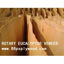 AA Grade Eucalyptus Veneer Wood Veneer for Plywood