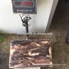 Frozen Giant Squid Tentacle , peru squid leg, ready for shipping squid