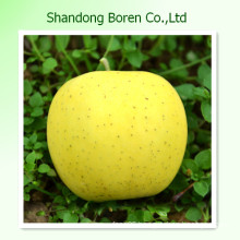 Delicious Golden Apple From Shandong Province
