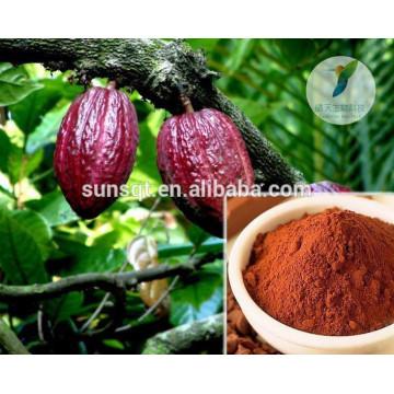 Bio-Theobroma-Kakao-Extrakt bester Qualität mit Theobromin