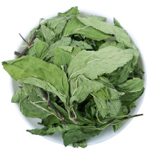 Factory direct sales High purity medicinal material natural fragrance mint leaves Chinese herbal medicine Expectorant