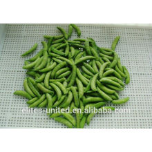 Cultivation IQF frozen vegetable sweet pea