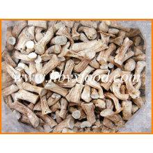 Chinês exportador de cogumelos secos Shiitake perna