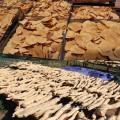 Großhandelsfabrik-Versorgungsmaterial 100% natürliches Tongkat Ali Auszug-Pulver 50: 1