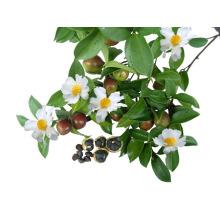 Терпинен-4-Ол, γ-Терпинен, альфа-терпинен Масло чайного дерева