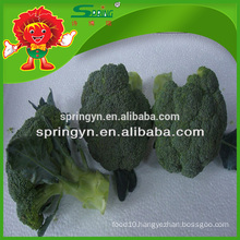 cheap price Export fresh broccoli frozen transportation green natural vegatable