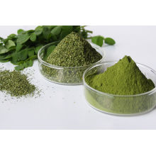 FDA Certified Moringa leaf powder from India