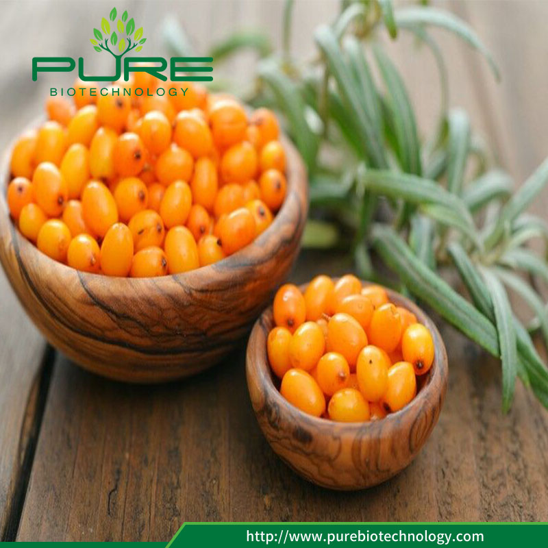 Pure Material Sea Buckthorn for Anti-Oxidant 4
