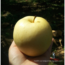 Fresh Gala / Golden Delicious / Jefe Rojo Apple
