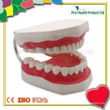 Modelo dentário dental dental humano