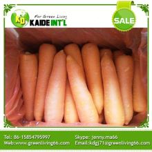 Wholesale Quality Fresh Carrots No Complaint
