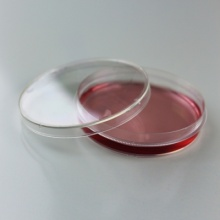 Tissue Culture Dishes 90mm