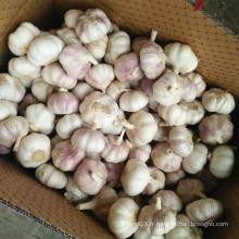 Nouvel an Fresh White White Garlic