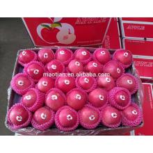 distribuidores al por mayor de manzanas frescas