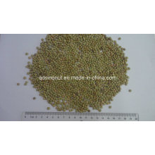 Gansu Origin Small Green Lentils