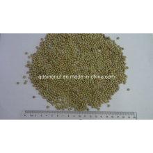 Gansu Origem Pequena Lentilha Verde