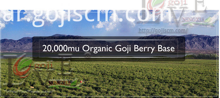 New Natural Goji Berry base