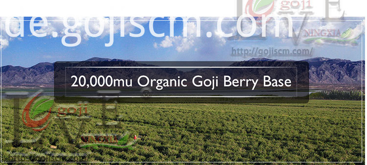 TOP QUALITY GOJI BERRY base