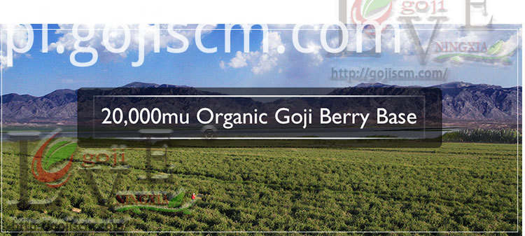 Sun Dried Goji Berry base