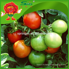Serres agricoles pour Tomate Red Sun Tomate