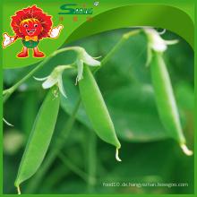 Massen Sie frische Bio-grüne Bohnen Landou