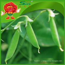 Массовые свежие органические зеленые бобы Landou