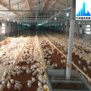 automatic chicken broiler poultry farm equipment for sale