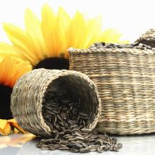 Innere Mongolei Zertifizierung Bio-Sonnenblumenkerne Exporteure