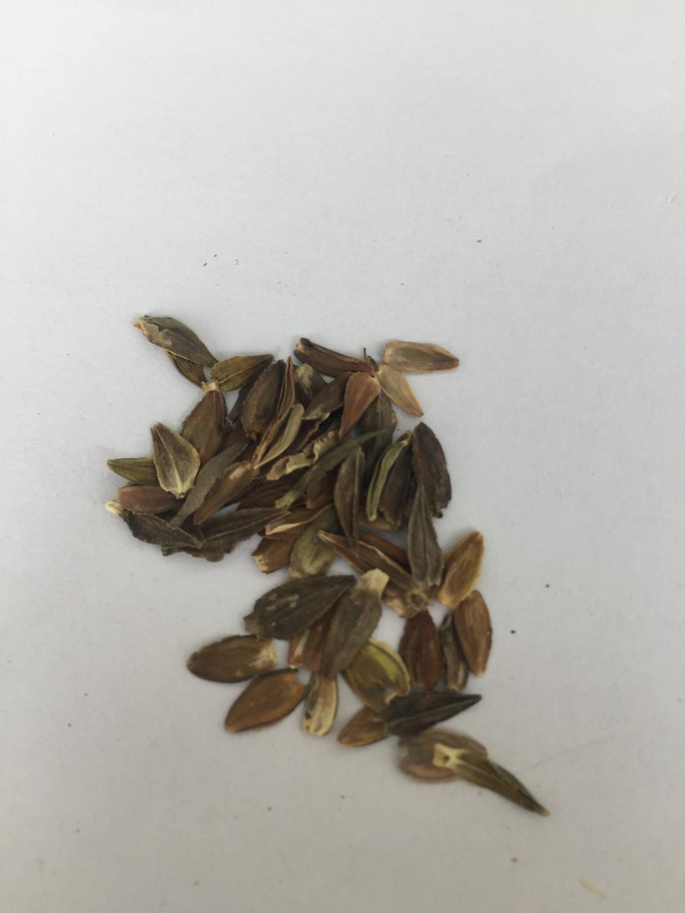 Flower seed germination temperatures