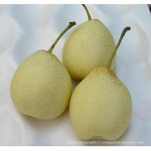 Chinois frais (ISO, HACCP, GLOBALGAP) Ya Pear