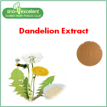 Paardebloem Wortel Extract