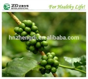 100% Pure and Natrural Green Coffee Bean Extract Supplement