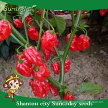Выращивание Suntoday из agricultue сычуаньский маринованный халапеньо F1hot перец чили hebanero семена гибридных овощей(22021)