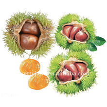 2013 fresh chestnut from china