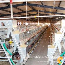 Automatische Geflügelausrüstung für Broiler und Legehennen
