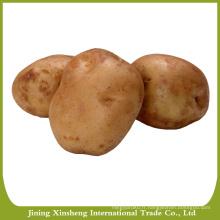 Nouvelles graines de pommes de terre fraîches à vendre