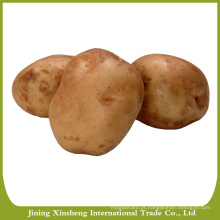 Novas sementes de batata frescas à venda