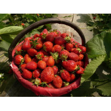 IQF Freezing Organic Strawberry HS-16090909