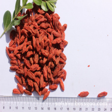 New crop organic goji for lose weight