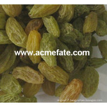 China suppliers best price green raisin