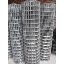 Hot-Dipped Galvanized Welded Wire Mesh/Galvanized Welded Wire Mesh/Anping Factory Galvanized Welded Wire Mesh